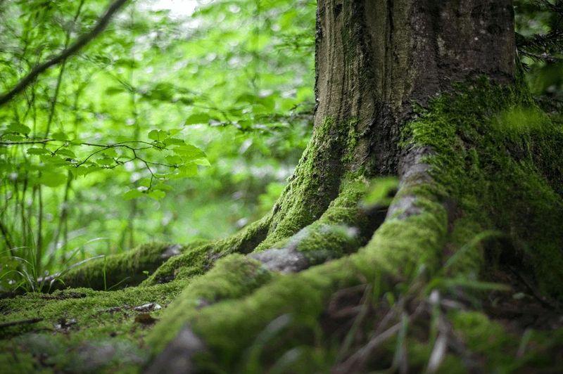 Démarche écologique de Thomas Liorac